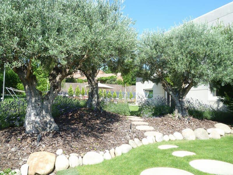 arboles-jardin